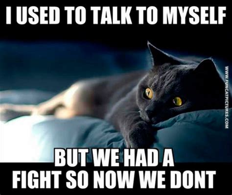 Talking Cat Meme - funny quotes about talking to yourself quotesgram