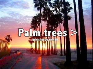 Palm Tree Quote... Inspiring Palm Tree Quotes