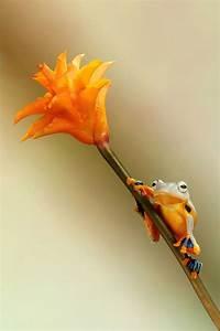 How To Light Fashion Photography Small World Around Us Beautiful Miniature World Of Frogs
