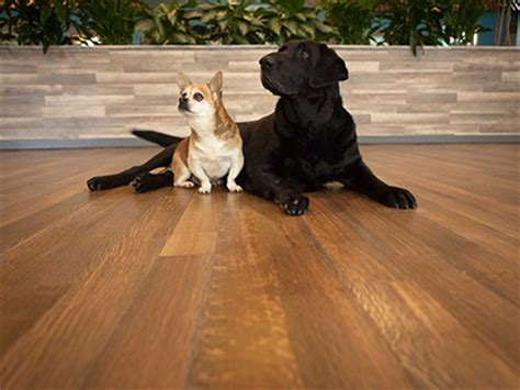durable flooring for pets hardwoof wood flooring line for pet owners leads industry in dent and scratch resistance