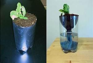 Hydroponics For Kids  Build A 2 Liter Bottle Garden