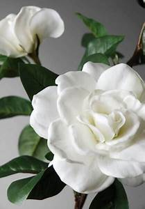 making of paper flower silk gardenias white