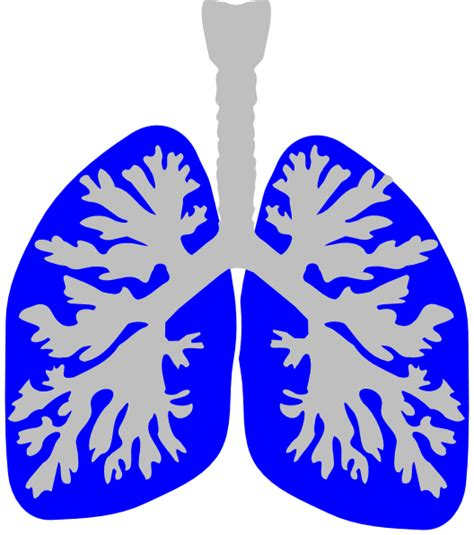 Lungs Clipart The Gallery For Gt Lungs Clipart