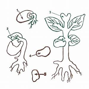 Plant Life Cycle Stamps