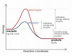 Catalyst Biology Of reaction without being  Activation Energy Example