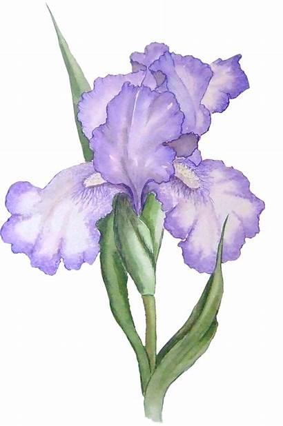 Iris Clipart Flower Water Clipground