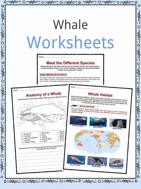 whale facts worksheets species diet information  kids