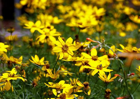 colorful perennials 10 colorful summer perennials for landscapers turf