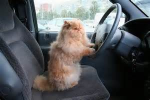 cat car cat safety 8 tips for safe car travel with your cat