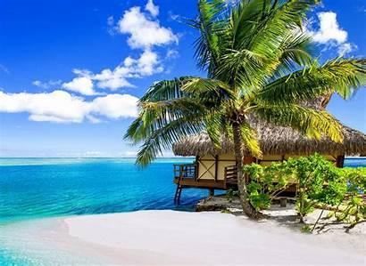 Tropical Bora Summer Beach Palm Nature Trees