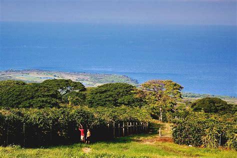 Kona Coffee Plantations, Big Island of Hawaii   Reviews, Pictures, Map   Visual Itineraries