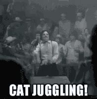Cat Juggling Gifs  Find & Share On Giphy