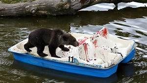 Two Month Calendar Baby Bear At Scottish Zoo Given Pedalo Lessons Itv News