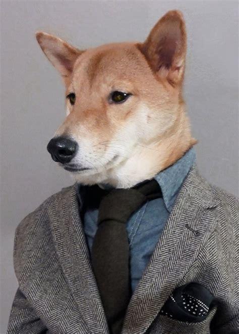menswear dog shows  men   dress