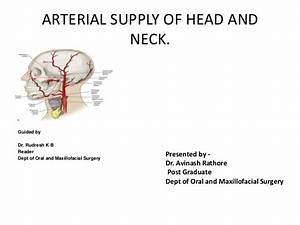 32 Arteries Of The Head And Neck Diagram