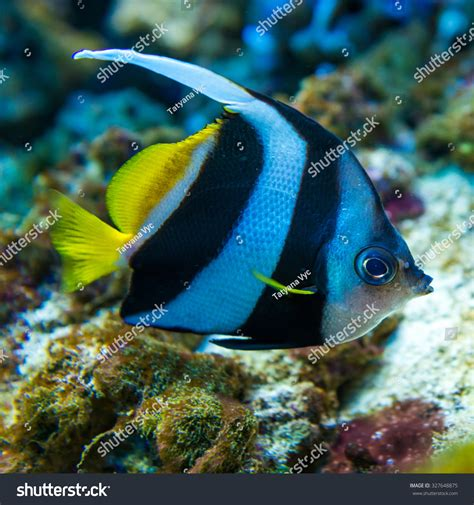 colorful saltwater fish colorful fish aquarium saltwater world stock photo