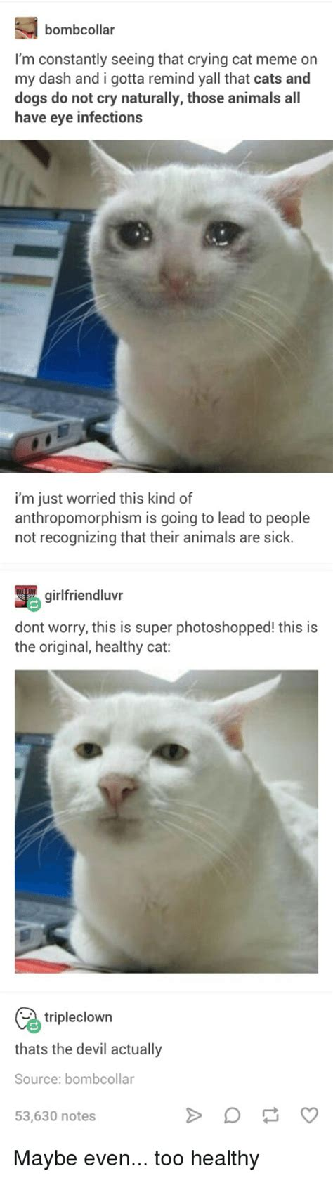 Crying Cat Meme - 25 best memes about crying cat crying cat memes