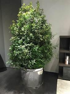Arbre En Pot : la plante verte d 39 int rieur comment en d corer votre maison ~ Premium-room.com Idées de Décoration