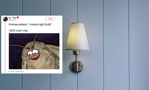 These Popular Memes About Moths & Lamps Might Actually
