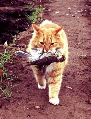cat behavior understand  cat