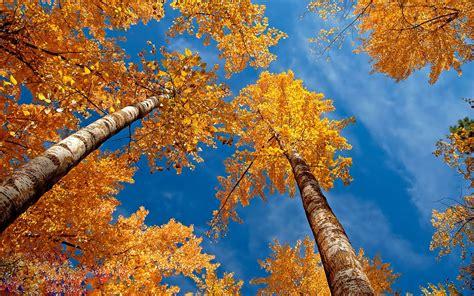 autumn trees nature wallpaper  wallpaperscom