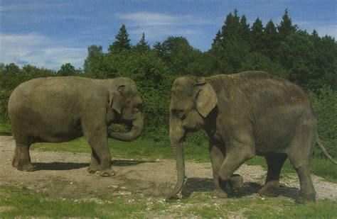 Les Zoos Dans Le Monde  Tiergarten & Reiterhof Walding