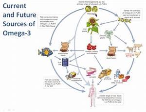 The Basics Of Omega 3 Fatty Acids