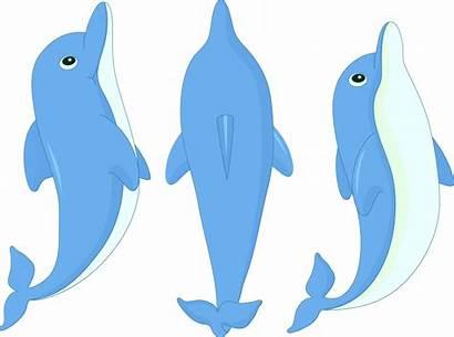 Dolphin Cartoon Clipart Clip Splash Transparent Dolphins