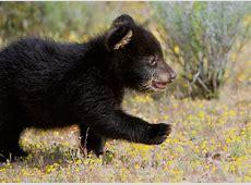 SPECIAL Springtime Wildlife Babies Photography Workshop