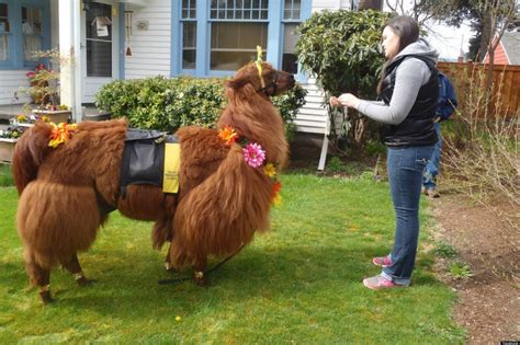 rojo  therapy llama  napoleon  therapy alpaca