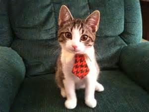cat tie 20 adorable cats wearing ties amazing creatures