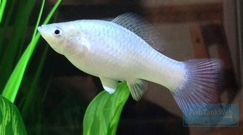 freshwater tropical fish fish tank tropical fish