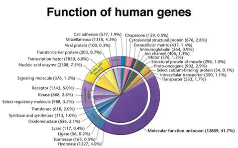 Human DNA Structure Genes