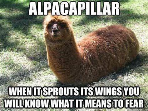 Funny Meme Animals - funny animal memes part 3