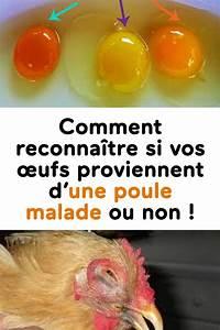 Comment Reconnaitre Des Oeufs Frais : comment reconna tre si vos ufs proviennent d une poule malade ou non santer poule ~ Louise-bijoux.com Idées de Décoration