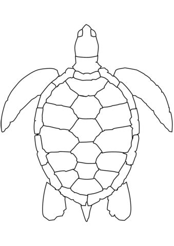 sea turtle coloring page  printable coloring pages