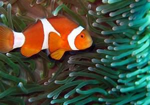 Nemo Fish Funny Animals