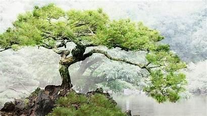 Bonsai Tree Background Wallpapers Pond Desktop Trees