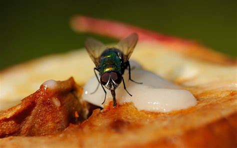 Should You Still Eat Your Food If A Fly Lands On It? Read