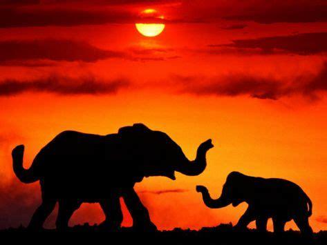 elephant silhouette sunset painting and elephants sunset light