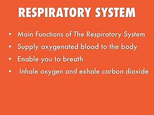 The Respiratory System By Macflo8535