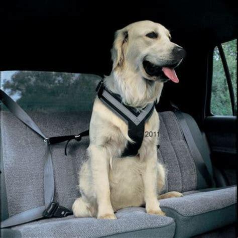 allsafe hunde sicherheitsgurt guenstig kaufen bei zooplus