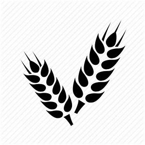 Grain, wheat, wheat crop icon | Icon search engine