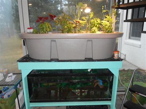 87 Best Aquaponics Images On Pinterest