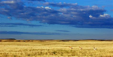 grasslands shrublands savannas  deserts