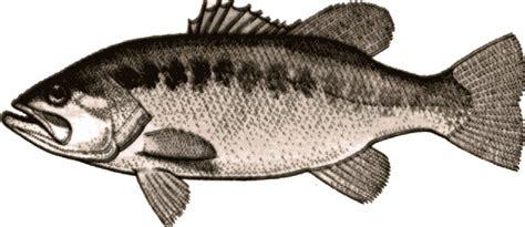 Bass Clipart Best Bass Clipart 16379 Clipartion