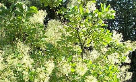 Winterharte Kübelpflanzen Schattig by Terrassenpflanzen Und K Winterharte K 252 Belpflanzen