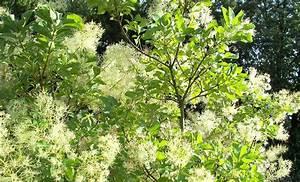 Winterharte Kübelpflanzen Schattig : absolut winterharte k belpflanzen erprobte auswahl ~ Michelbontemps.com Haus und Dekorationen