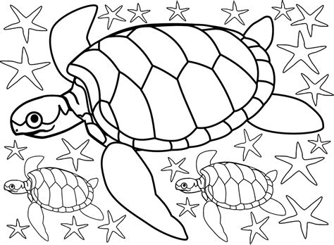 beach colouring turtles  starfish rooftop post