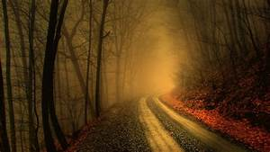 free, hd, dark, woods, wallpapers, download